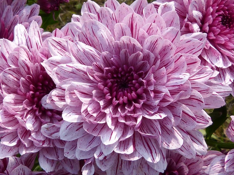 fleurs 2, crédit photo : .
